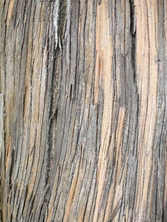 Vertical textured pattern of stripped tree bark Stock fotó