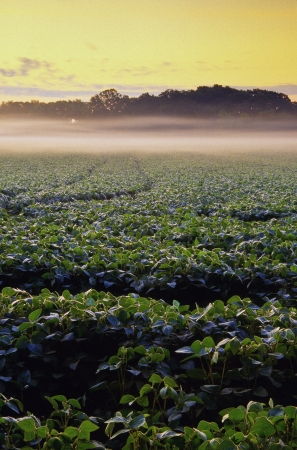 Farm field with crops at sunrise Stock fotó - 24759209