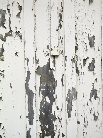 chipped: Rough textured old wooden wall with peeling paint