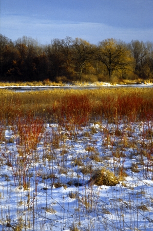 Freshly covered field near Madison, Wisconsin with grasses poking out from the snow  Stock fotó