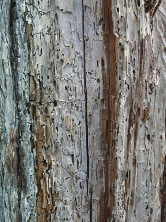 Vertical textured pattern of cracked tree photo