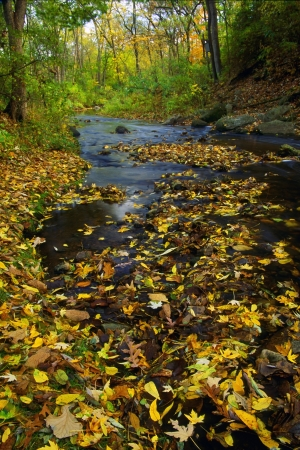 Water stream in wooded area of Madison, Wisconsin  Stock fotó