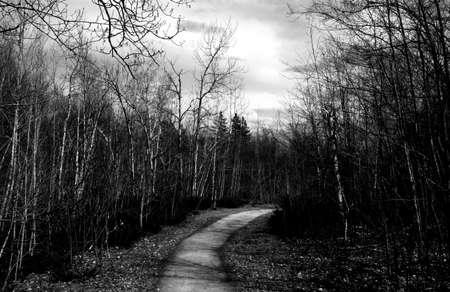 woodland path: Path in forest