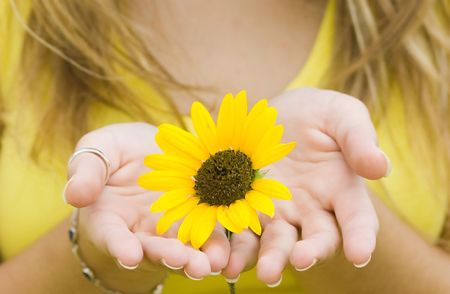 Young woman holding a Sunflower. Stock Photo