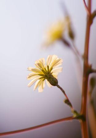 Japanese Flower.