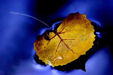 Yellow leaf on blue water.