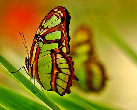 Butterfly in the Amazon Jungle.