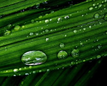 Water Drops on a Blade of Grass.