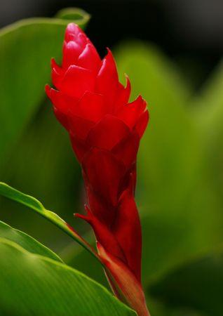 Beautiful Exotic flower. Stock Photo