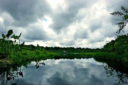 Amazon Jungle Lake Reflections. Stock Photo