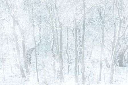 Forest on a snowy day, great background.