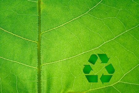 Recycle Symbol on backlit leaf macro.