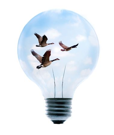 Clean energy, a light bulb with a bright sky and birds.