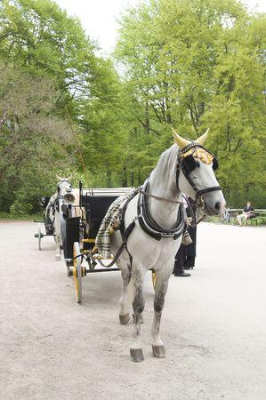 Horse Stock Photo - 482886