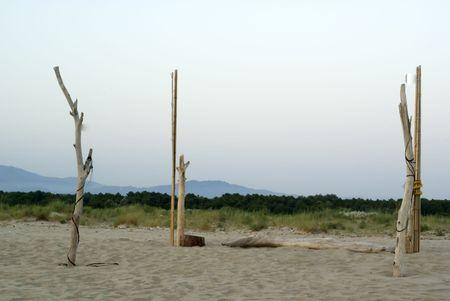 unspoiled: Algunos �rboles desnudos en una playa en Italia. Paisaje virgen.