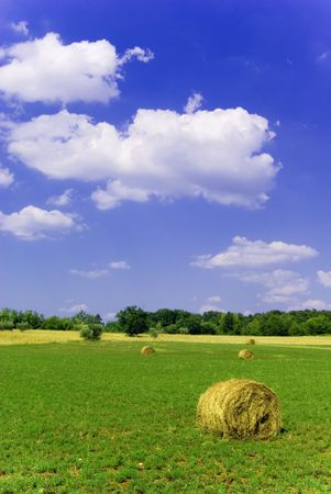 hayroll: Agricultural landscape of hay bales in a field
