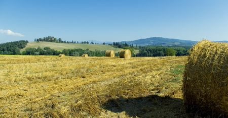 golden hayfield in a bright blue sky in chianti, tuscany Stock Photo - 1343195