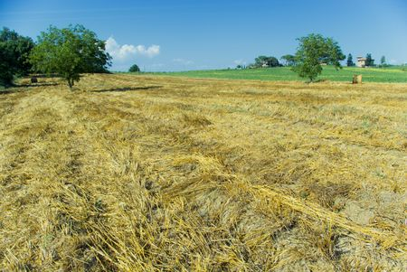 golden hayfield in a bright blue sky in chianti, tuscany Stock Photo - 1343205