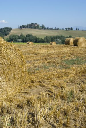 golden hayfield in a bright blue sky in chianti, tuscany Stock Photo - 1343184