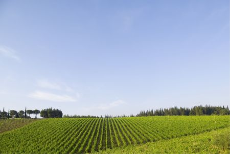 Chianti winefield, tuscany Stock Photo