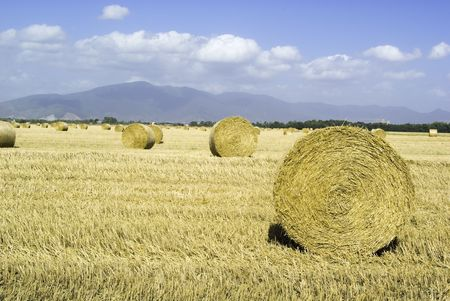 hayroll: golden hayfield in a bright blue sky in chianti, tuscany
