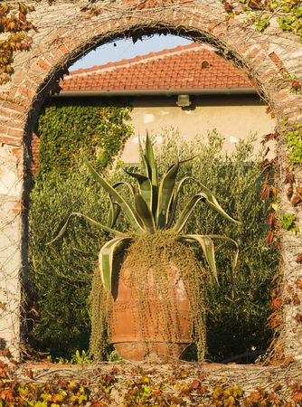 An agave americana adorns the exterior of a a classic provencean style house. Agave is a plant which tequila and mezcal are made from. Stock Photo