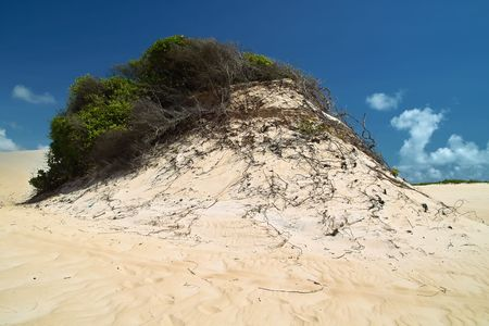 unspoiled: Hermosas dunas v�rgenes de Genipabu, de Natal. Brasil