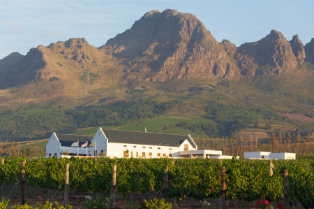 Landscape scenics of vineyards and mountains tellenbosch Winelands, Western Cape, South Africa.
