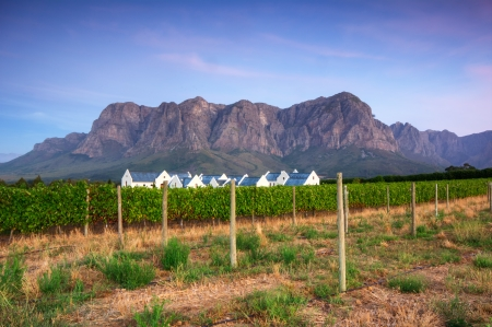 south western: Sunset over a vineyard with Table Mountain in the background, Stellenbosch, Cape Winelands, Western Cape, South Africa Stock Photo