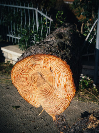 natural disaster: Fallen trees by strong wind, natural disaster theme, shallow depth of field.