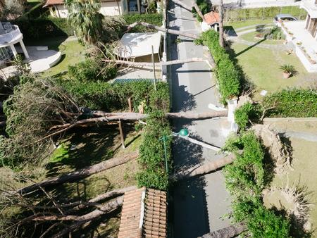 強い風、自然災害のテーマ、フィールドの浅い深さで倒木。