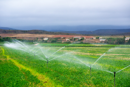 Sprinkler installation irrigating a field of maize in South Africa Stock Photo
