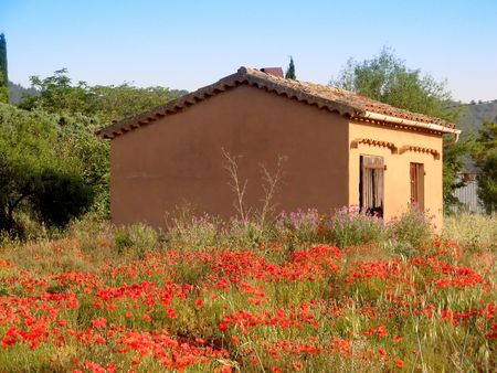 little house in a poppies field