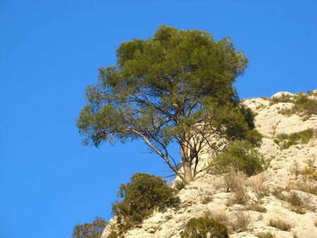the luberon: An image of a provence mountain landscape... shot in the Luberon