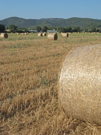 hayroll: View of some hayrolls in a field