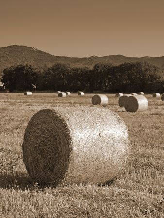 hayroll: a view of some hayrolls in a meadow