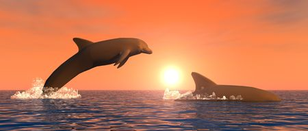illustration showing some dolphins playing at sunset illustration