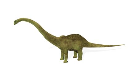3D render of an isolated diplodocus dinosaur  photo