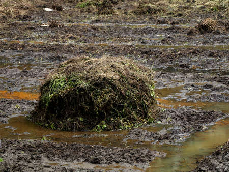 Heap of decaying weeds kept as manure for preparing a village paddy field, organic cultivation concept