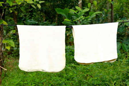 White color rubber sheets hung for drying against green background