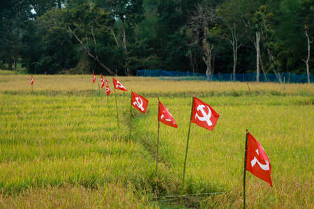 Political party flags place in paddy field for election campaign, Kerala, India