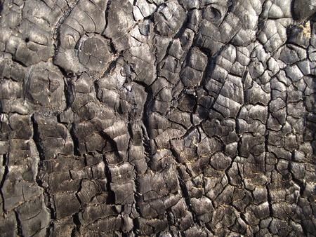 burnt: burnt wood texture