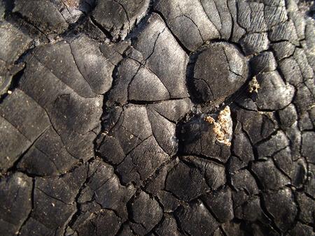 burnt wood: burnt wood texture