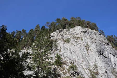 Carpathian Montain rock in Romania , Bicaz Chei, Pine forest 版權商用圖片 - 156641451
