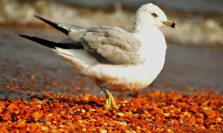 Bird  walk at th beach.. photo