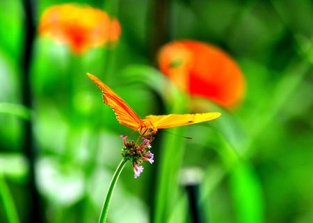 Glowing butterfly on a leaf.. 免版税图像