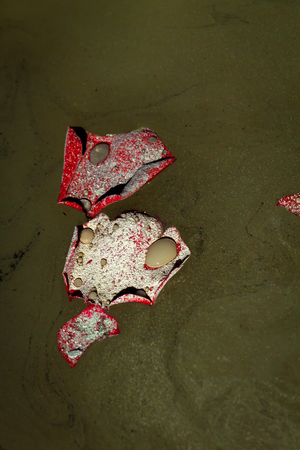 loved: Detail of ashes of a cremated loved one floating on rose petals on a lake. Stock Photo