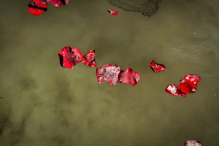 loved: Rose petals and the ashes of a loved one float on lake water.