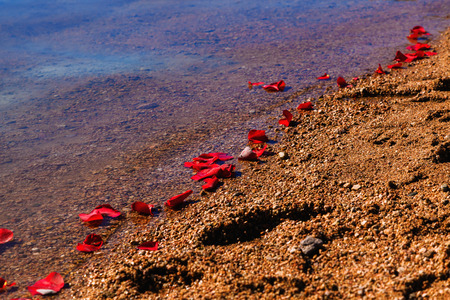loved: Rose petals that washed up on a shoreline after a memorial service and spreading ashes of a loved one. Stock Photo