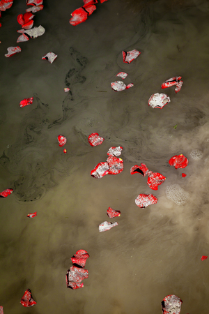 loved: Rose petals and the ashes of a loved one float on lake water as they are being scattered.